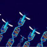 gene drive organisms